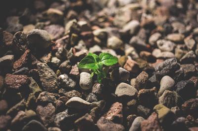 Investir é como plantar uma árvore